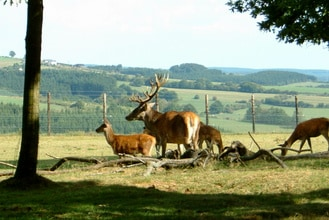 Ferienhaus Vakantiepark Les Onays (60046), Achouffe, Luxemburg (BE), Wallonien, Belgien, Bild 9