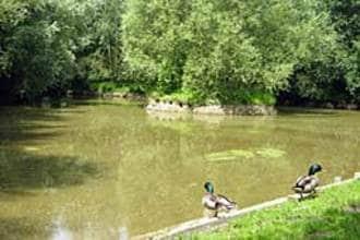 Ferienhaus Le Chalet en Bois 3 (58667), Quend, Somme, Picardie, Frankreich, Bild 8