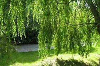 Ferienhaus Le Chalet en Bois 3 (58667), Quend, Somme, Picardie, Frankreich, Bild 11
