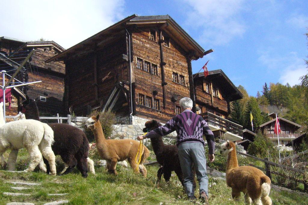 Vakantiewoningen  Zwitserland te huur Bellwald- CH-3997-07    te huur
