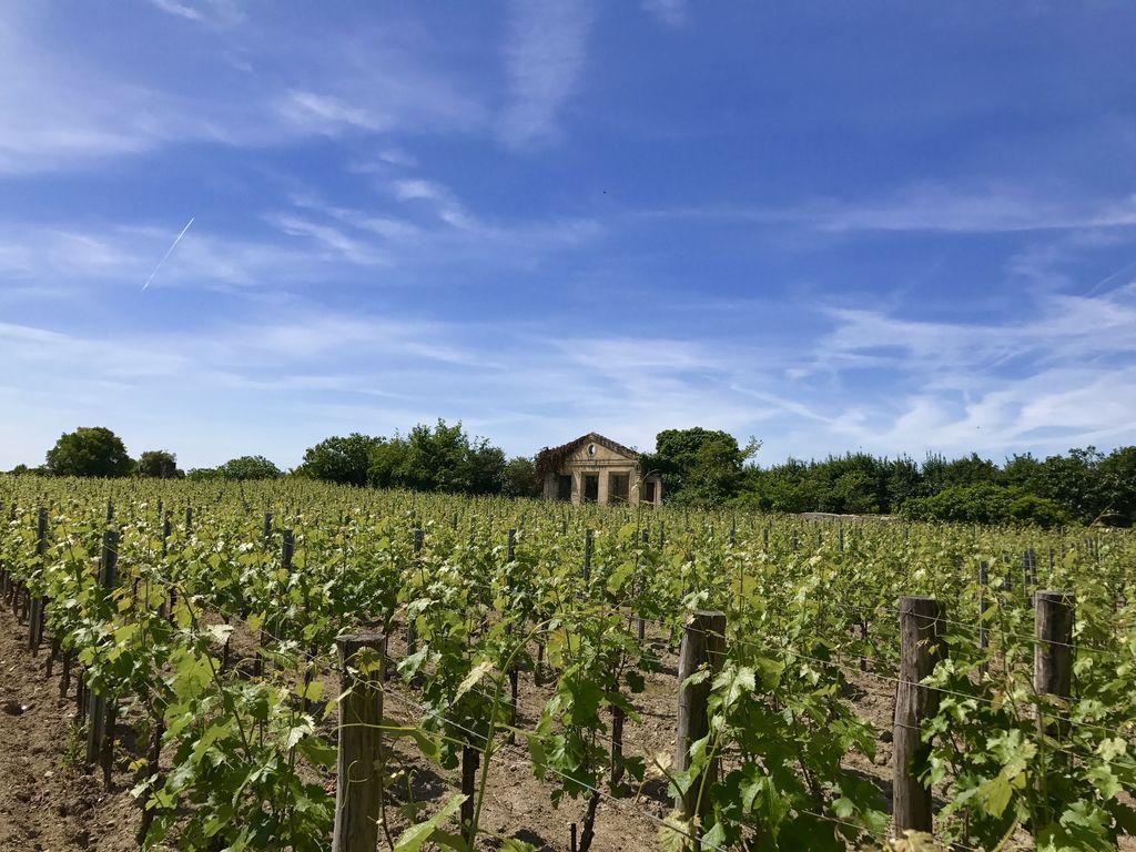 Maison de vacances Maison avec piscine privée dans les vignobles (1404549), Lussac, Gironde, Aquitaine, France, image 26