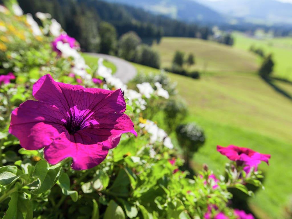 Appartement de vacances Glonersbühelhof (699419), Westendorf, Kitzbüheler Alpen - Brixental, Tyrol, Autriche, image 32