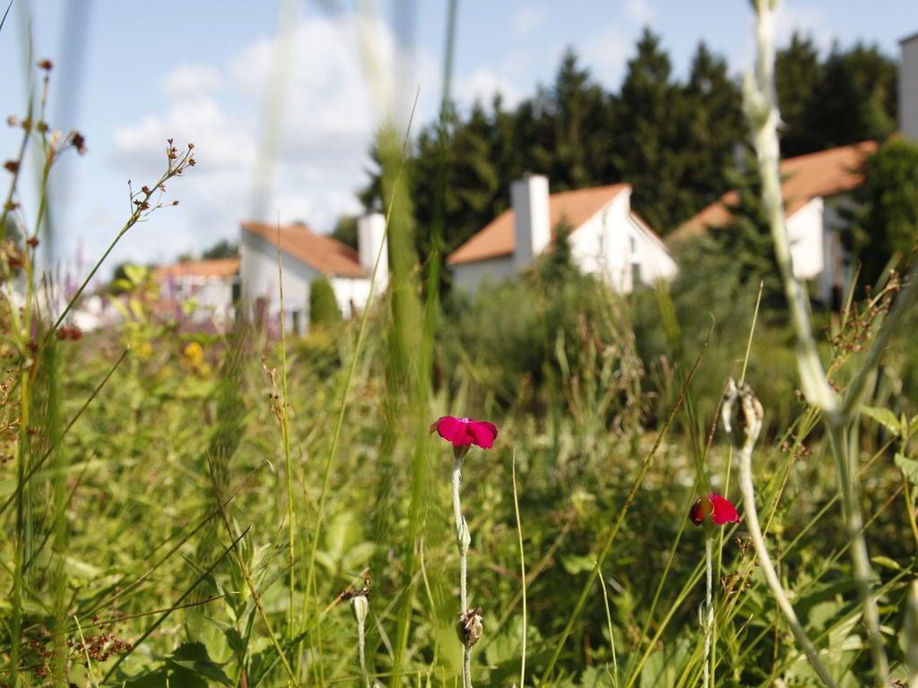 Ferienhaus Gemütliches Holzchalet mit Geschirrspüler in autofreier Zone (703259), Arcen, Noord-Limburg, Limburg (NL), Niederlande, Bild 33