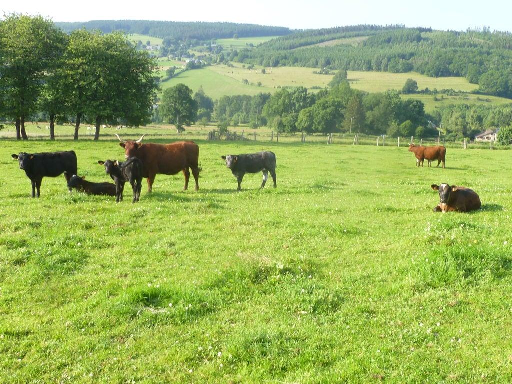 Ferienhaus Idyllischer Bauernhof in Grand-Halleux mit eigenem Garten (926417), Vielsalm, Luxemburg (BE), Wallonien, Belgien, Bild 34