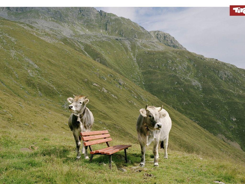 Appartement de vacances Oma Wetti (957136), Hopfgarten im Brixental, Hohe Salve, Tyrol, Autriche, image 23