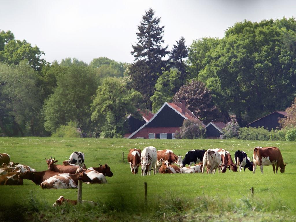 Ferienhaus Recreatiepark Het Winkel 3 (1698553), Brinkheurne, Achterhoek, Gelderland, Niederlande, Bild 27