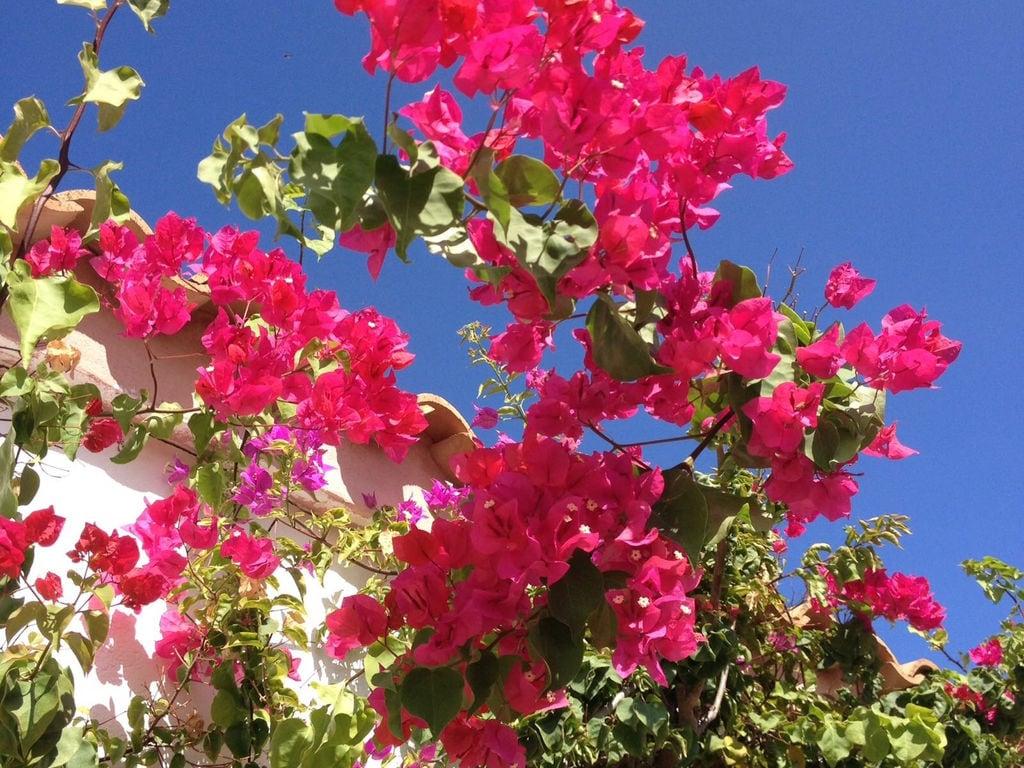Ferienhaus Can Alejo (2404289), Mola, Formentera, Balearische Inseln, Spanien, Bild 27