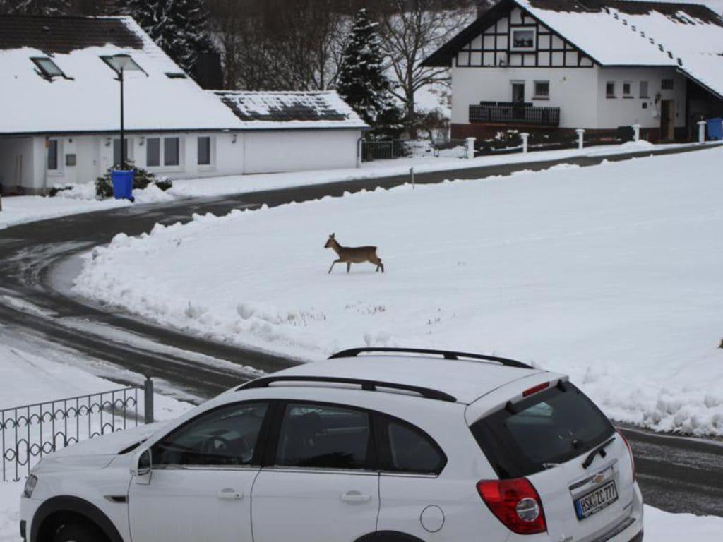 Ferienwohnung Idyllische Ferienwohnung nahe dem Skigebiet in Liesen (1975862), Hallenberg, Sauerland, Nordrhein-Westfalen, Deutschland, Bild 30