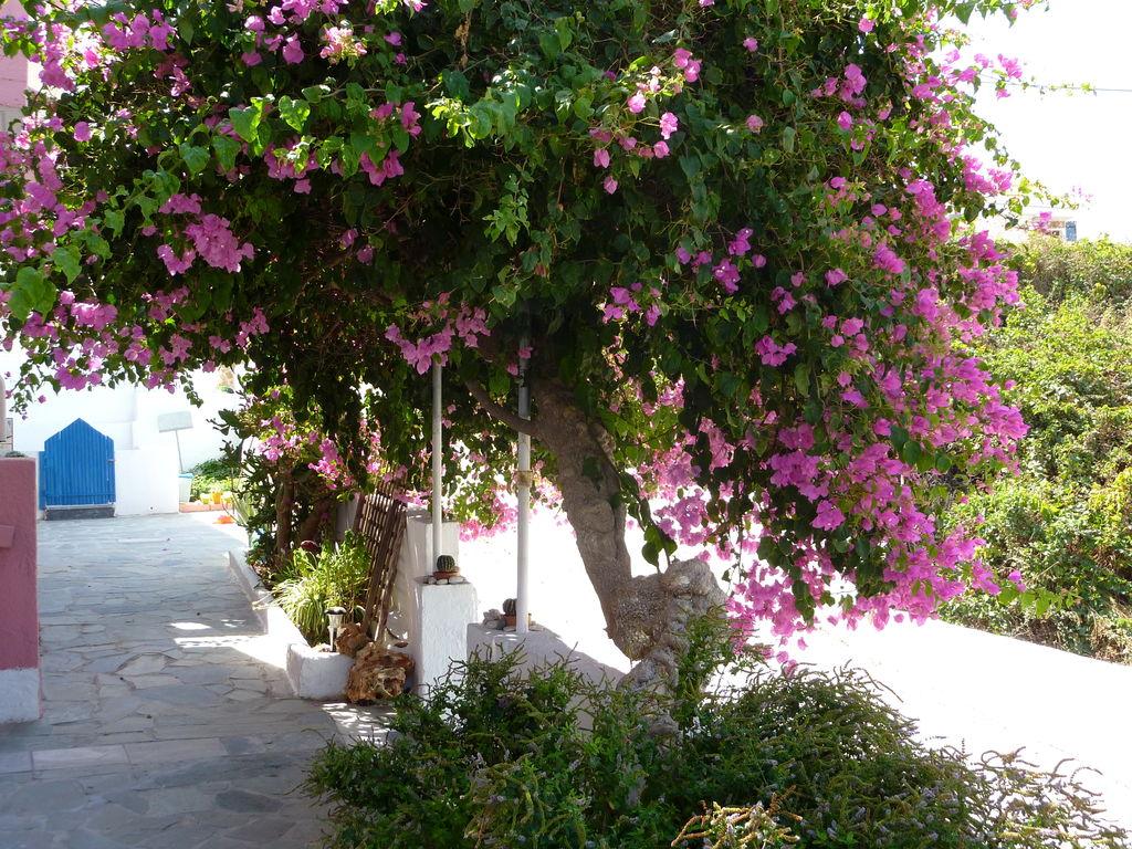 Ferienwohnung Blue Sea Studio (2022097), Kalami, Kreta Nordküste, Kreta, Griechenland, Bild 21