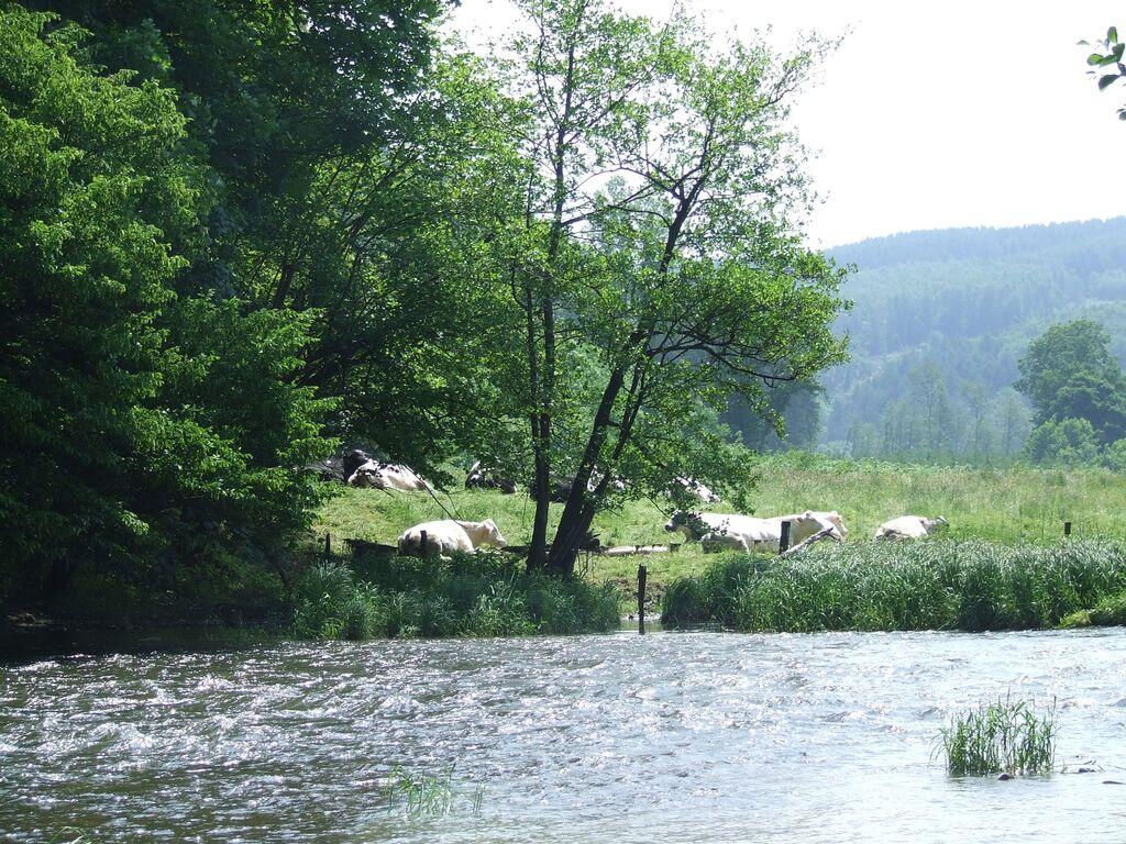 Ferienhaus Komfortables Chalet in den Ardennen mit Schwimmbad (2122526), Manhay, Luxemburg (BE), Wallonien, Belgien, Bild 29