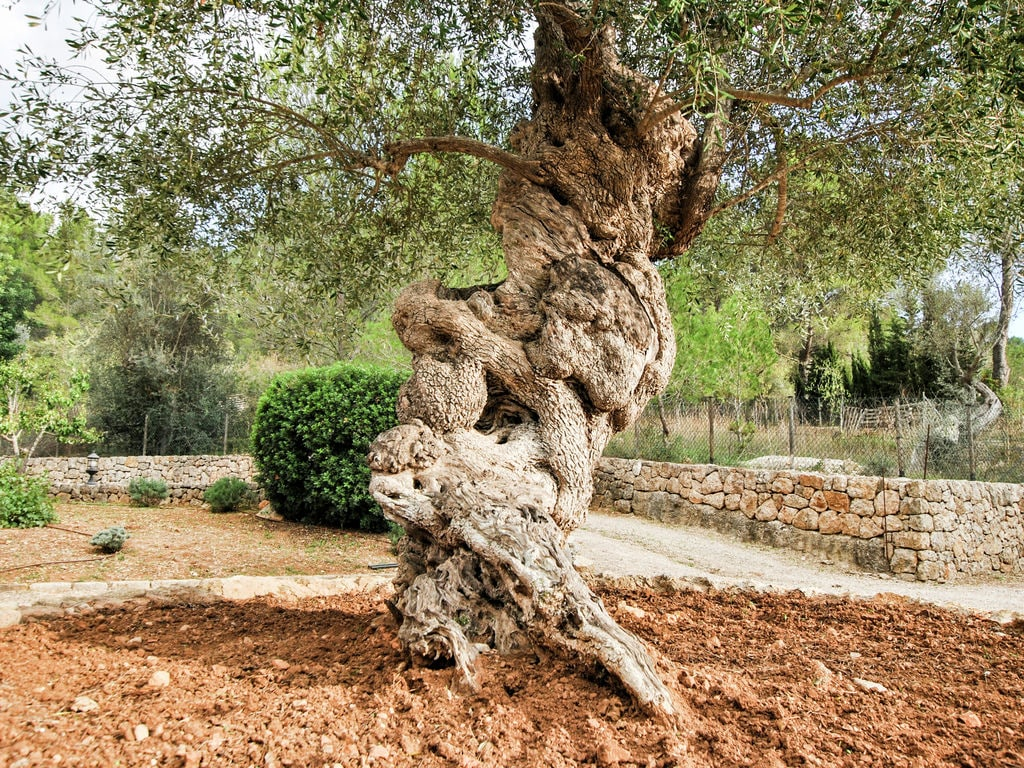 Maison de vacances Finca Son Flora (2298314), Alaro, Majorque, Iles Baléares, Espagne, image 40