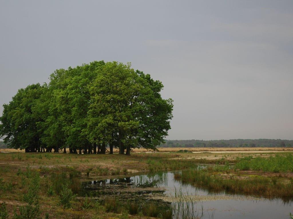Ferienhaus Landgoed De IJsvogel 7 (2511704), Voorthuizen, Veluwe, Gelderland, Niederlande, Bild 25