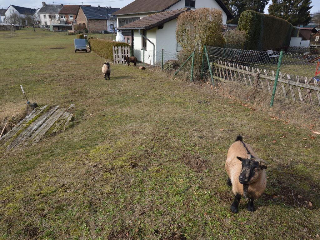 Ferienwohnung Gemütliches Appartement in der Eifel am Waldrand (2571395), Hillesheim, Vulkaneifel, Rheinland-Pfalz, Deutschland, Bild 21