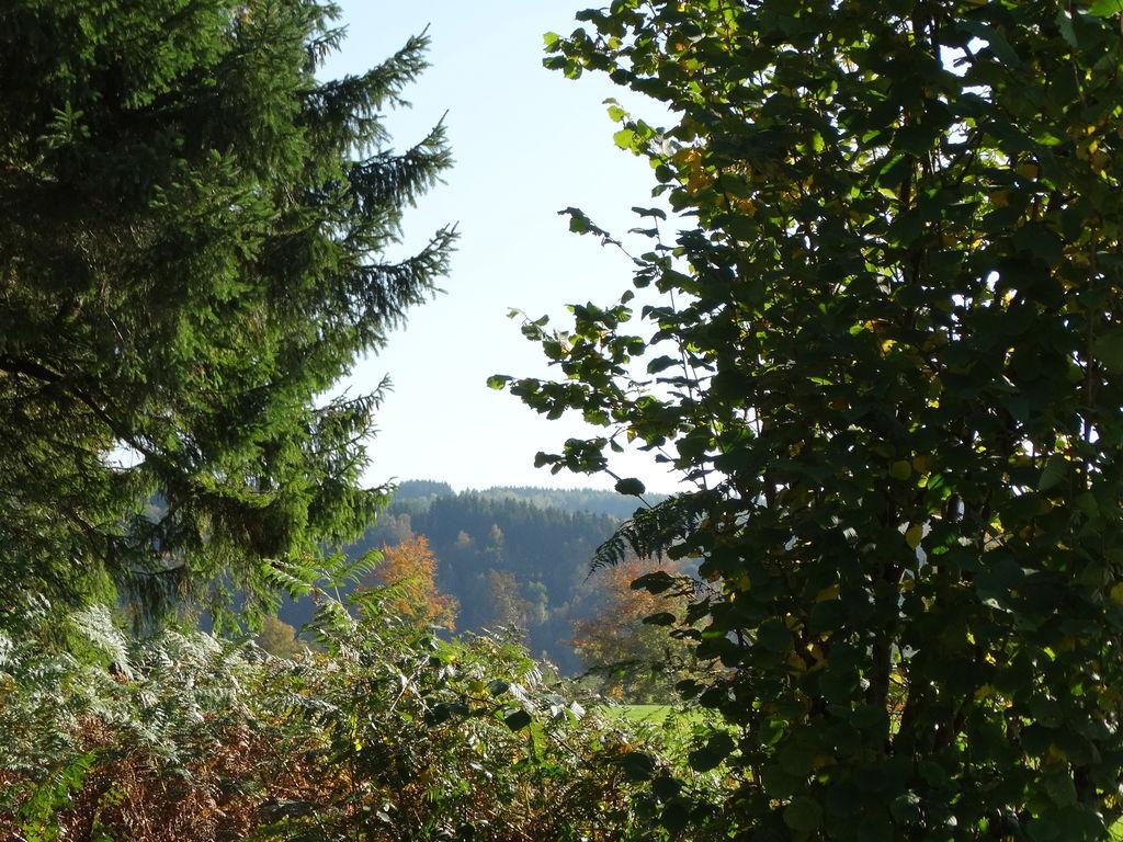 Ferienhaus Geräumiges Ferienhaus in Mont mit Garten (2583213), Malmedy, Lüttich, Wallonien, Belgien, Bild 27