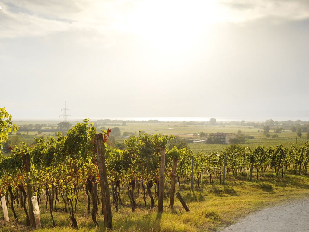 Ferienwohnung Pannonia L03 (2631171), Lutzmannsburg, Sonnenland Mittelburgenland, Burgenland, Österreich, Bild 20