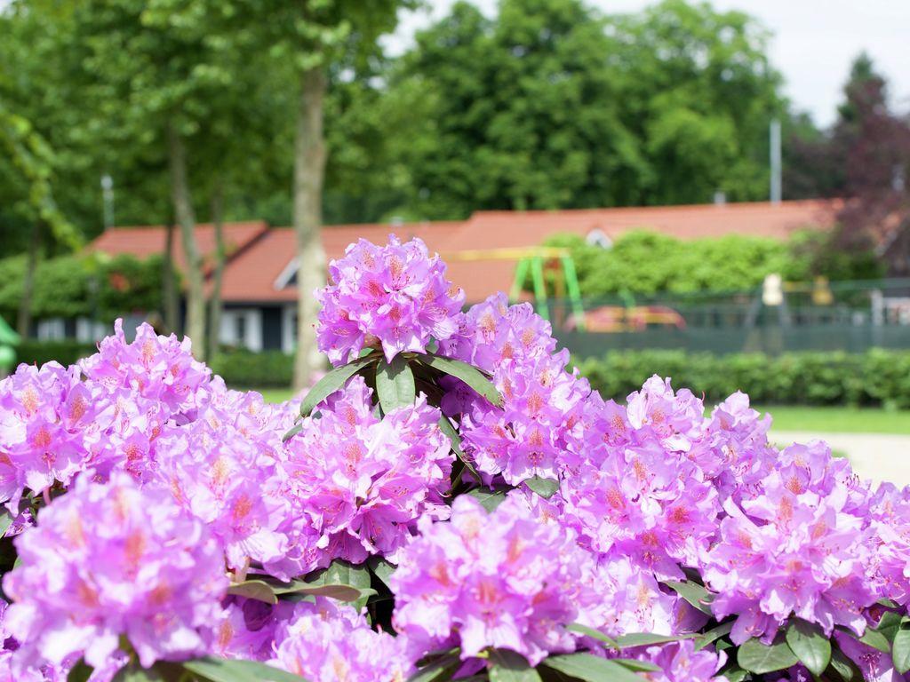 Ferienwohnung Zeltlodge mit Sanitäranlagen an Bedafse Bergen (2643474), Bedaf, , Nordbrabant, Niederlande, Bild 20