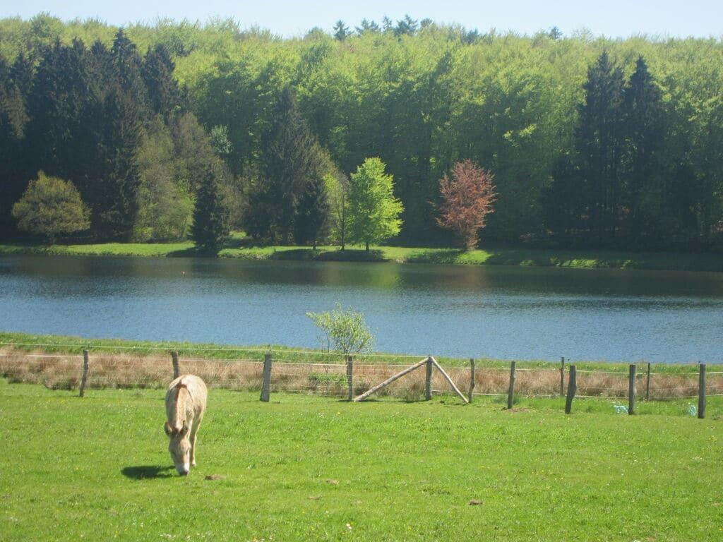 Ferienhaus Luxuriöses tierfreundliches Chalet in Bièvre in Waldnähe (2685050), Bièvre, Namur, Wallonien, Belgien, Bild 22