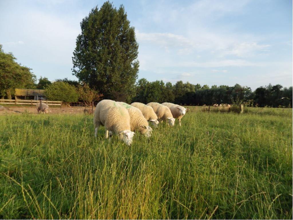 Ferienhaus Gemütliches, komfortables Ferienhaus beim Bauern in Horssen mit Garten (2753724), Horssen, Rivierenland, Gelderland, Niederlande, Bild 31