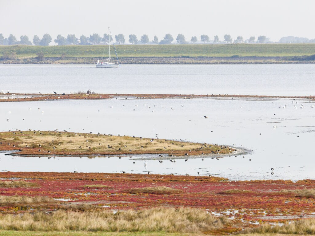 Ferienwohnung Domein Het Camperveer Veerse Meer 6 (2791637), Kamperland, , Seeland, Niederlande, Bild 16