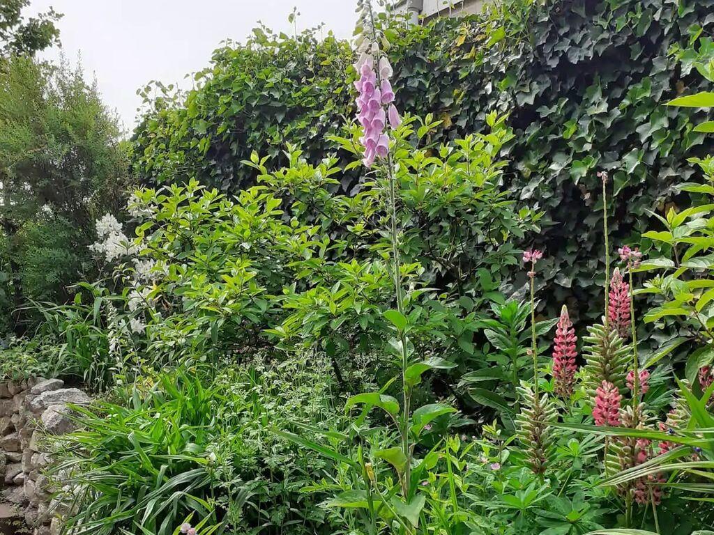 Ferienhaus Schönes Ferienhaus in Putten mit einem schönen großen Garten (2802230), Putten, Veluwe, Gelderland, Niederlande, Bild 12