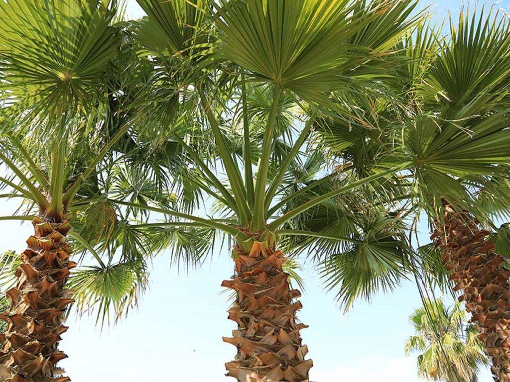 Ferienhaus Freundlicher Campingplatz in der Nähe des beliebten Badeortes Le Cap d'Agde (2873726), Agde, Mittelmeerküste Hérault, Languedoc-Roussillon, Frankreich, Bild 8
