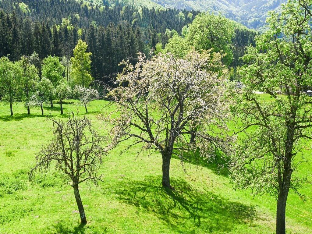 Ferienwohnung Verlockende Wohnung in Scheibbs bei Erlauf (2889327), Scheibbs, Mostviertel, Niederösterreich, Österreich, Bild 21