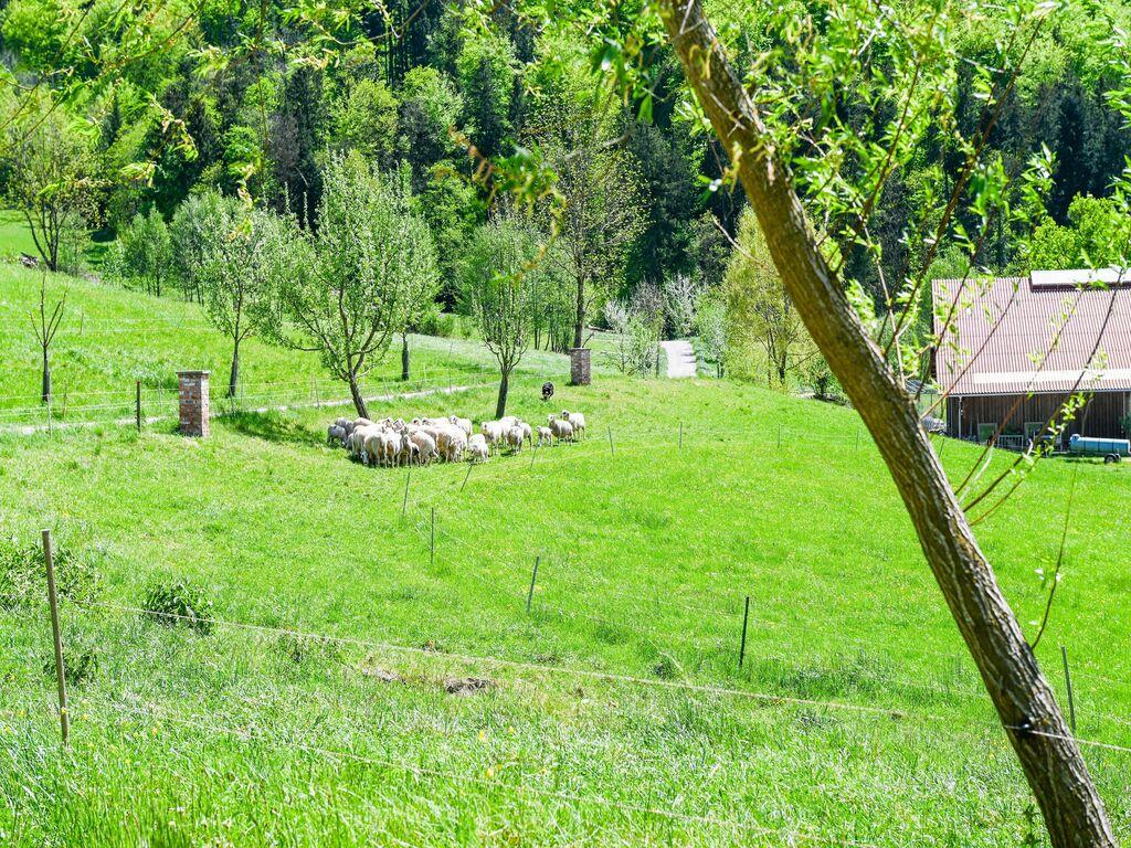 Ferienwohnung Verlockende Wohnung in Scheibbs bei Erlauf (2889327), Scheibbs, Mostviertel, Niederösterreich, Österreich, Bild 19