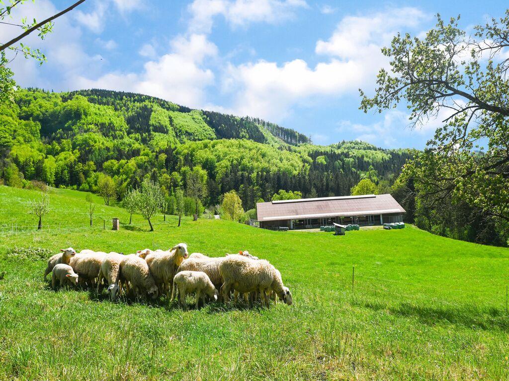 Ferienwohnung Verlockende Wohnung in Scheibbs bei Erlauf (2889327), Scheibbs, Mostviertel, Niederösterreich, Österreich, Bild 22
