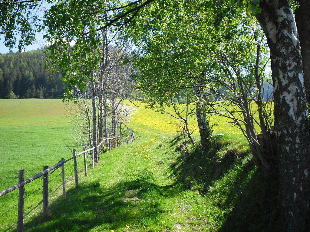 Ferienhaus in Kleindiex unweit des Waldes (254157), Ruden, Klopeiner See, Kärnten, Österreich, Bild 15