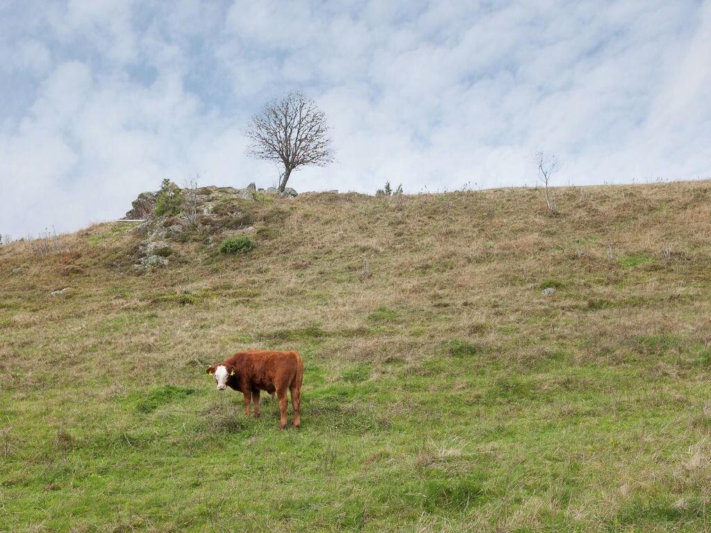 Ferienwohnung Gemütlicher Bauernhof in Unteribach, Deutschland mit Balkon (255396), St. Blasien, Schwarzwald, Baden-Württemberg, Deutschland, Bild 17