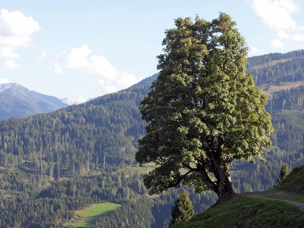 Ferienwohnung Geräumige Hütte in der Nähe des Skigebiets in Wagrain (253598), Wagrain, Pongau, Salzburg, Österreich, Bild 21