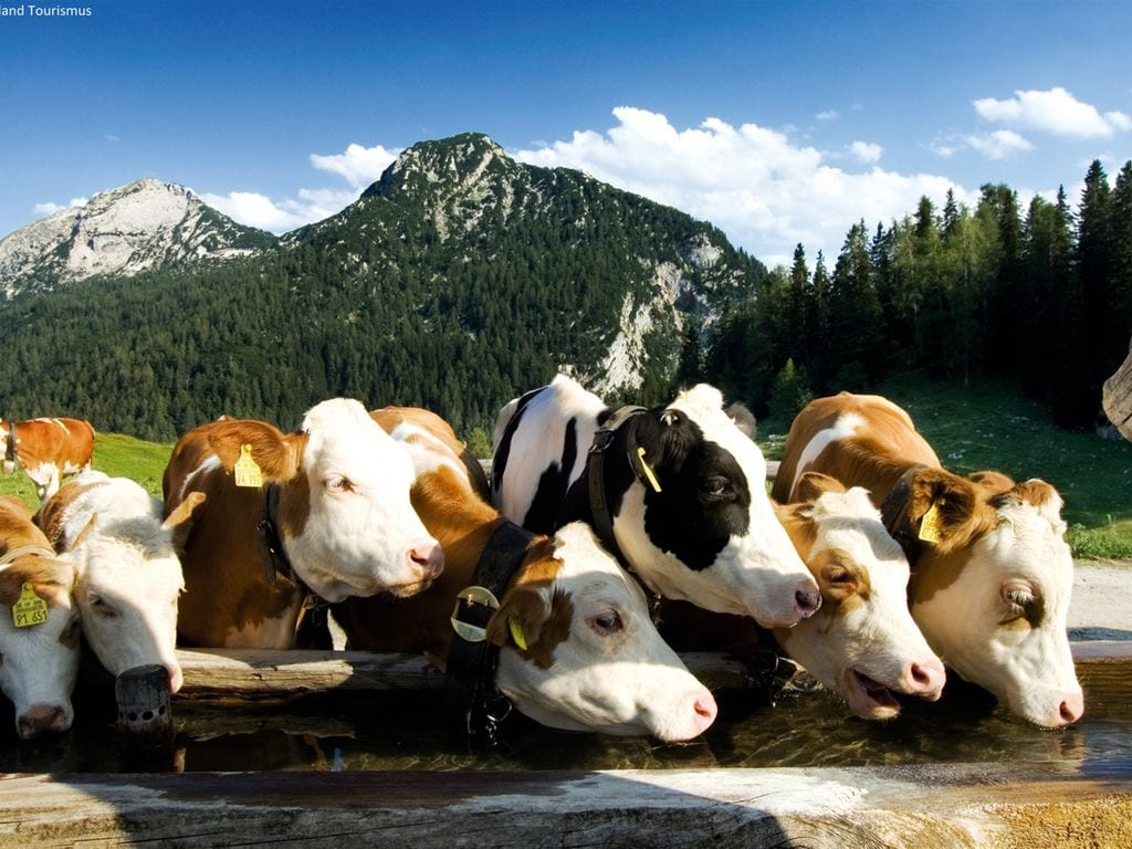 Ferienwohnung Prugger (254151), Ramsau am Dachstein, Ramsau am Dachstein, Steiermark, Österreich, Bild 28