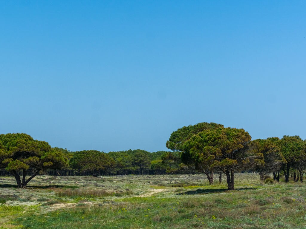 Ferienwohnung Rives et Jardins D15 (264619), Port Barcarès, Mittelmeerküste Pyrénées-Orientales, Languedoc-Roussillon, Frankreich, Bild 25