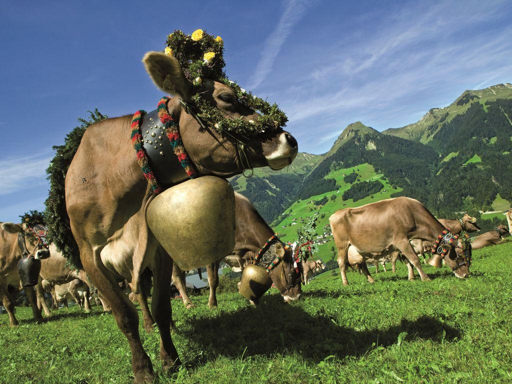 Ferienwohnung Schuchter (254048), Tschagguns, Montafon, Vorarlberg, Österreich, Bild 23