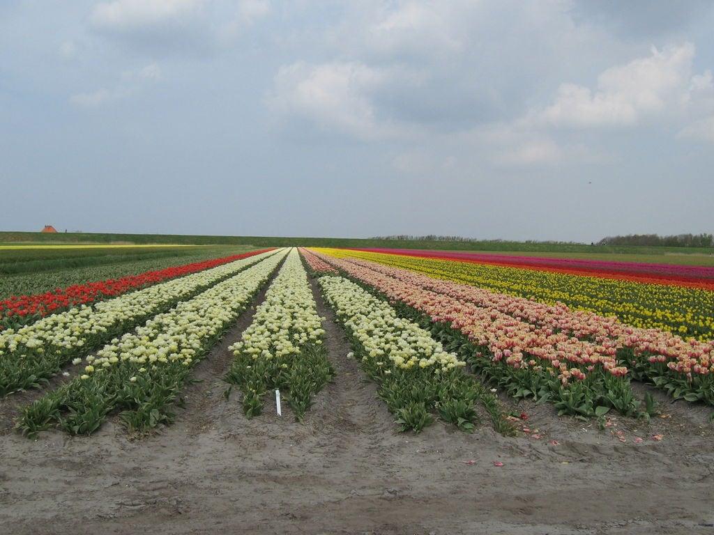 Ferienwohnung 't Achterom (65692), 't Zand NH, Halbinsel Noord Holland, Noord Holland, Niederlande, Bild 28