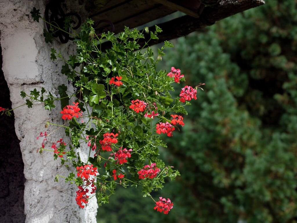Appartement de vacances Oberreiter (253586), Flachau, Pongau, Salzbourg, Autriche, image 26
