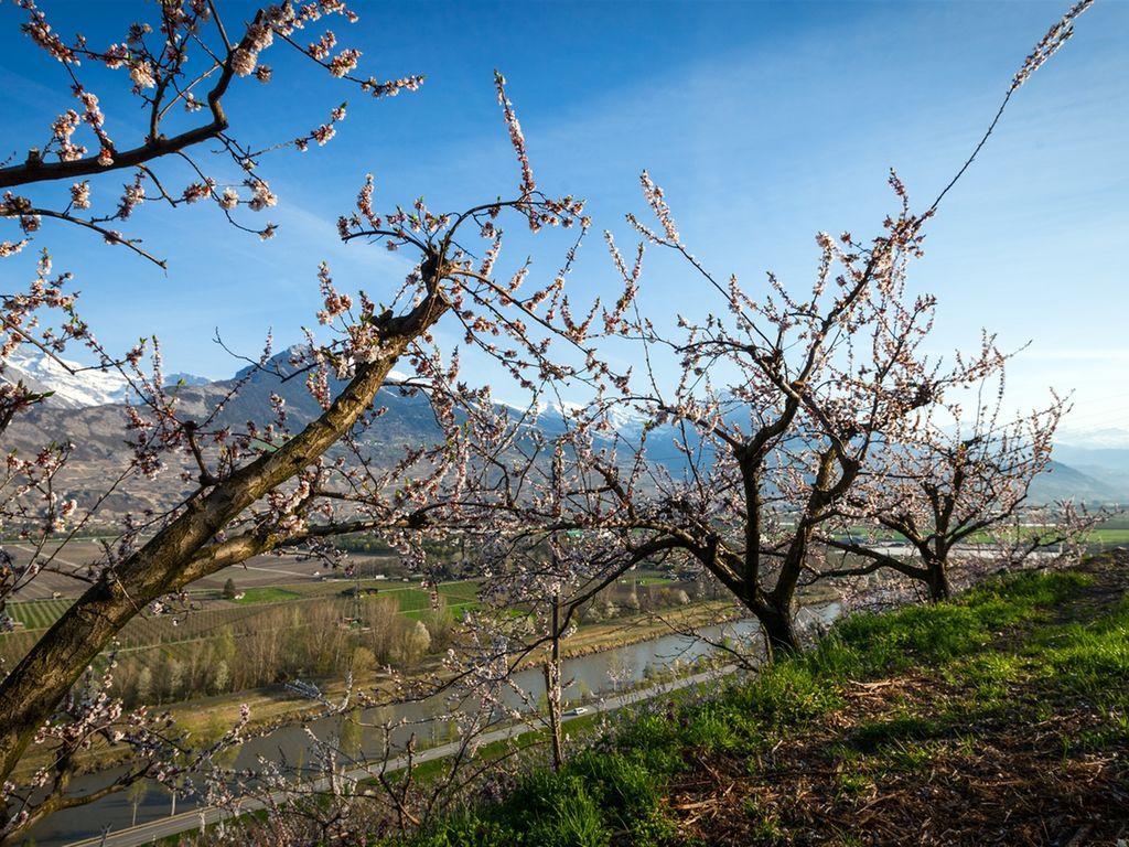 Ferienwohnung Philemon (254641), Grächen, Grächen - St. Niklaus, Wallis, Schweiz, Bild 14
