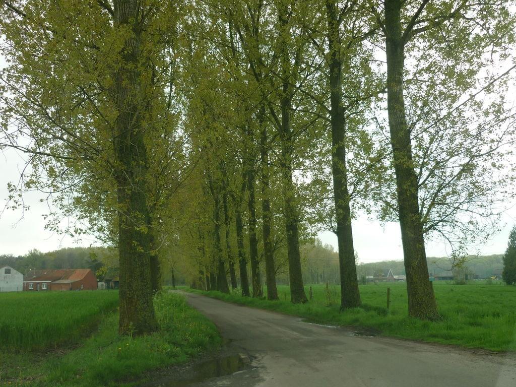 Ferienhaus De Snoeibijl (59343), Kruiskerke, Westflandern, Flandern, Belgien, Bild 25
