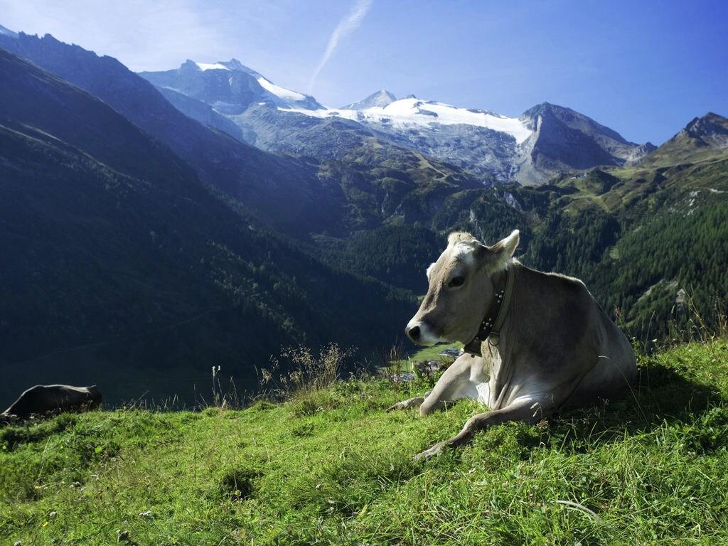 Ferienwohnung Großzügiger Bauernhof in Aschau im Zillertal mit Wiesenblick (253792), Aschau (Zillertal), Zillertal, Tirol, Österreich, Bild 39