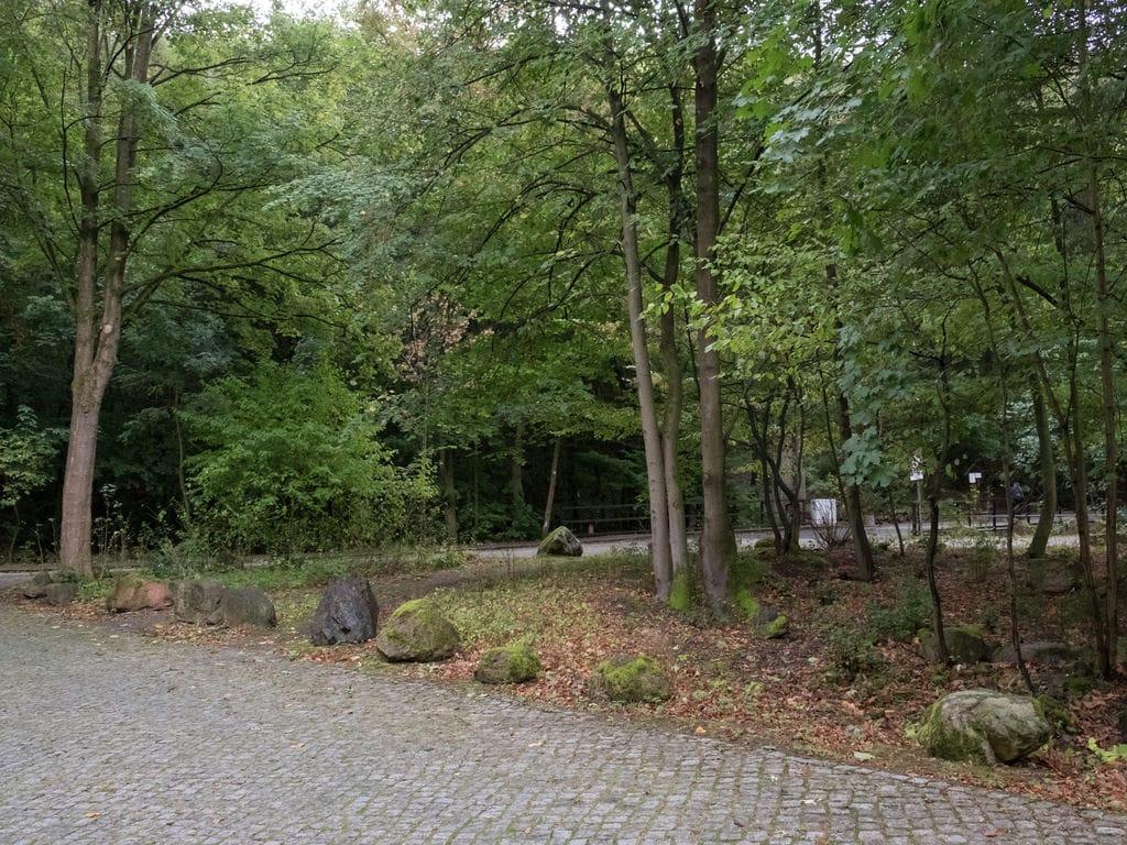 Ferienwohnung Schöne Wohnung im Ilsenburger Harz nahe des Skigebietes (255066), Ilsenburg, Harz (Sachsen-Anhalt), Sachsen-Anhalt, Deutschland, Bild 26