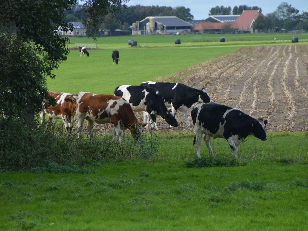 Ferienhaus Visserhuis Het Achterend (60982), Warns, IJsselmeer (Friesland/NL), Friesland (NL), Niederlande, Bild 19