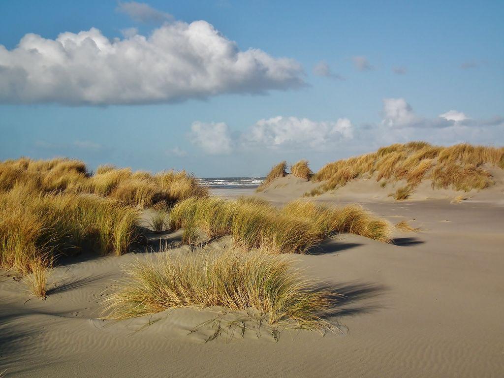Ferienwohnung Zomerkoninkje (58797), Nes Ameland, Ameland, Friesland (NL), Niederlande, Bild 14