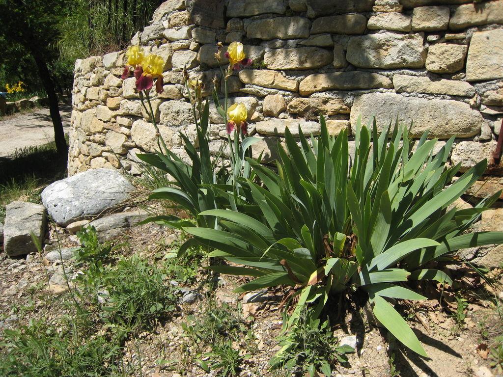 Ferienhaus La Trinite (59020), Saint Martin de Castillon, Vaucluse, Provence - Alpen - Côte d'Azur, Frankreich, Bild 11