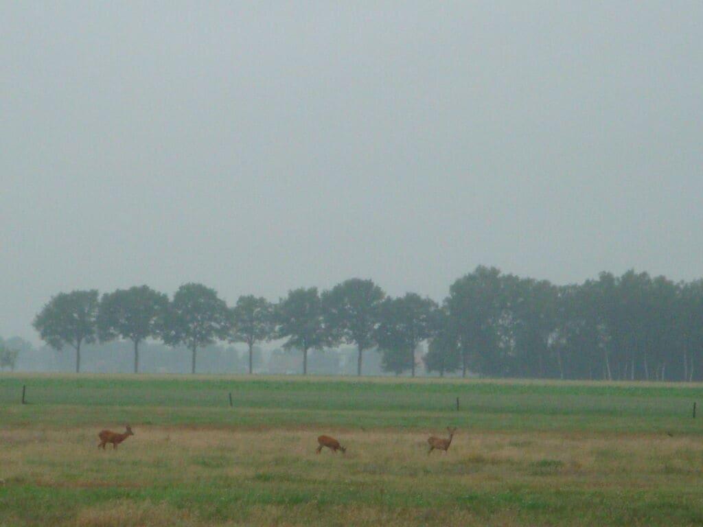 Ferienhaus Buitenplaats Berg en Bos 18 (61503), Lemele, Salland, Overijssel, Niederlande, Bild 20