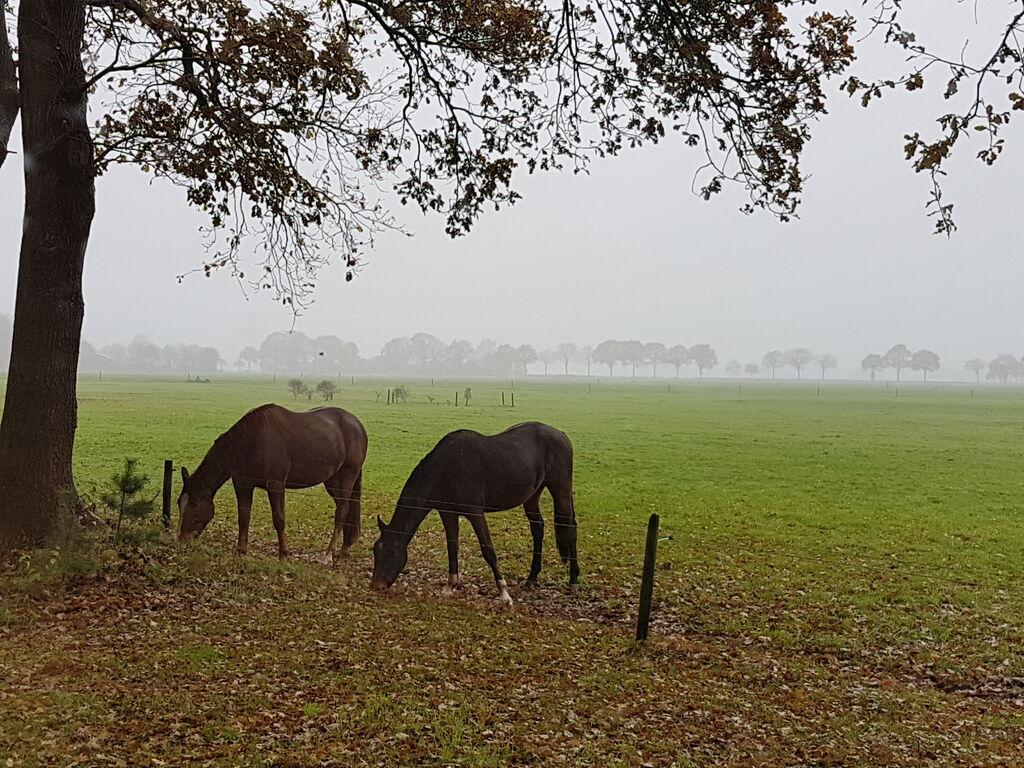 Ferienhaus Buitenplaats Berg en Bos 18 (61503), Lemele, Salland, Overijssel, Niederlande, Bild 23