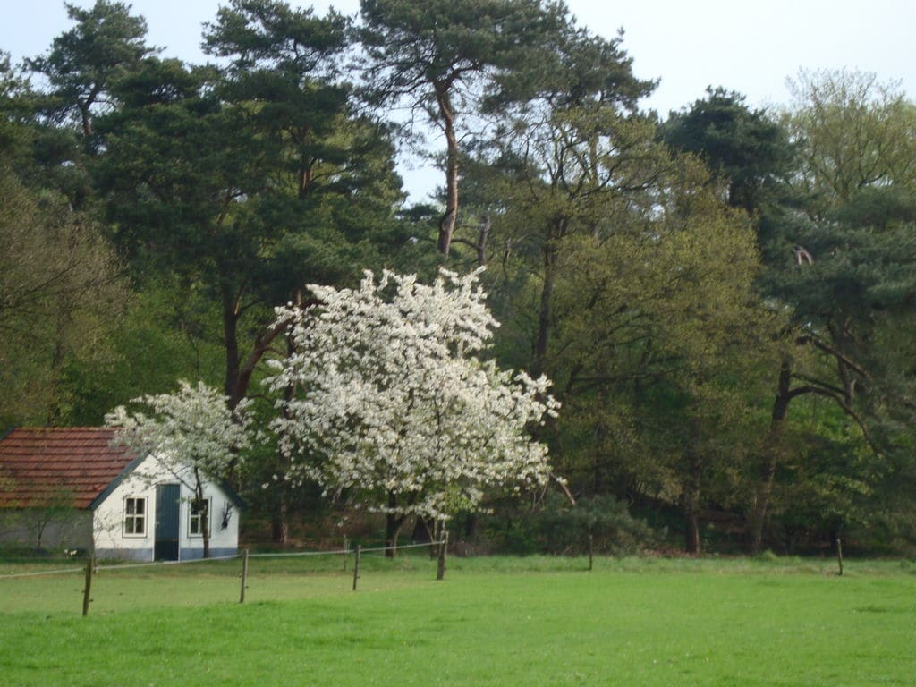 Ferienhaus Buitenplaats Berg en Bos 15 (61499), Lemele, Salland, Overijssel, Niederlande, Bild 31