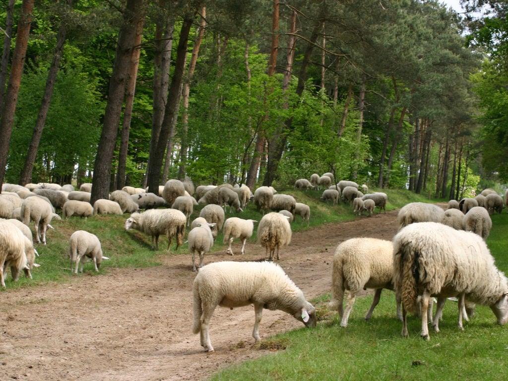 Ferienhaus Buitenplaats Berg en Bos 39 (61508), Lemele, Salland, Overijssel, Niederlande, Bild 30