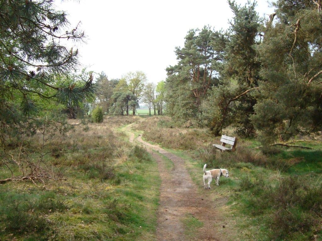 Ferienhaus Buitenplaats Berg en Bos 39 (61508), Lemele, Salland, Overijssel, Niederlande, Bild 29