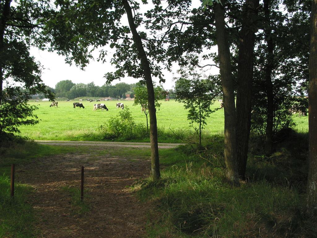 Ferienhaus Vakantiepark Herperduin 6 (65701), Herpen, , Nordbrabant, Niederlande, Bild 22