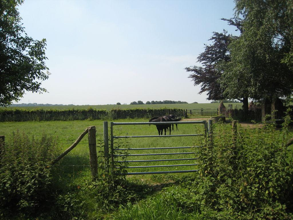 Ferienwohnung Meschermolen 3 (65742), Mesch, Zuid-Limburg, Limburg (NL), Niederlande, Bild 19